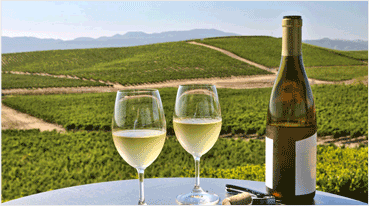 Wine Tours To Napa From San Francisco